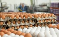 علت گرانی تخم مرغ از زبان معاون وزیر جهاد کشاورزی
