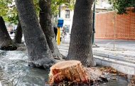 جریمه قطع درختان تهران در سال ۱۴۰۰چقدر است ؟