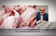 واردات مرغ توجیه پذیر نیست