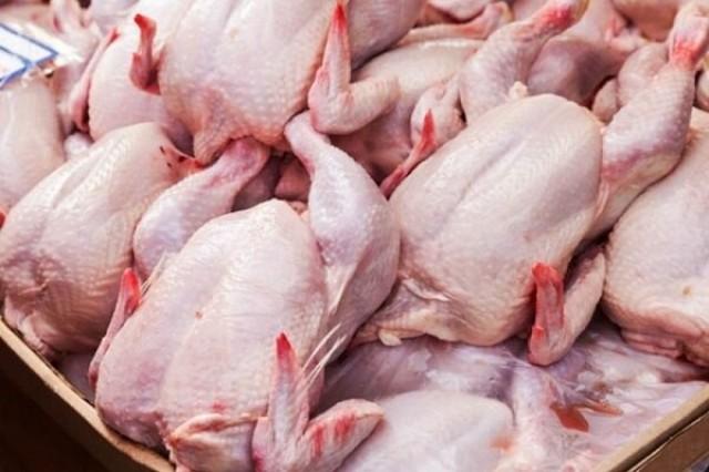 احتمال کمبود مرغ در ماههای آینده